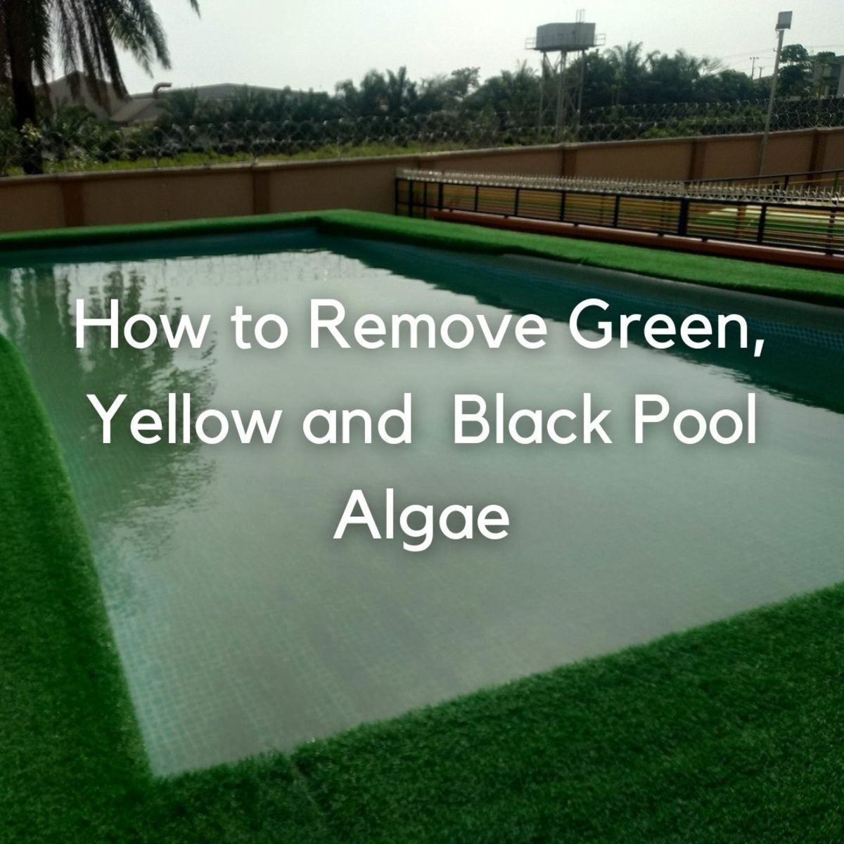 If a swimming pool is not well-chlorinated, it may develop three different colors of algae: Green (may appear dark blue), yellow(mustard), and black.