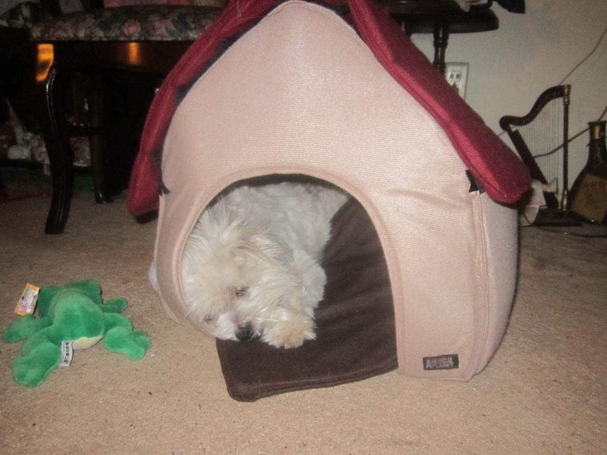 "Gizmo in his like-new hideaway with his toy frog (that ""ribbits"") to the side!"
