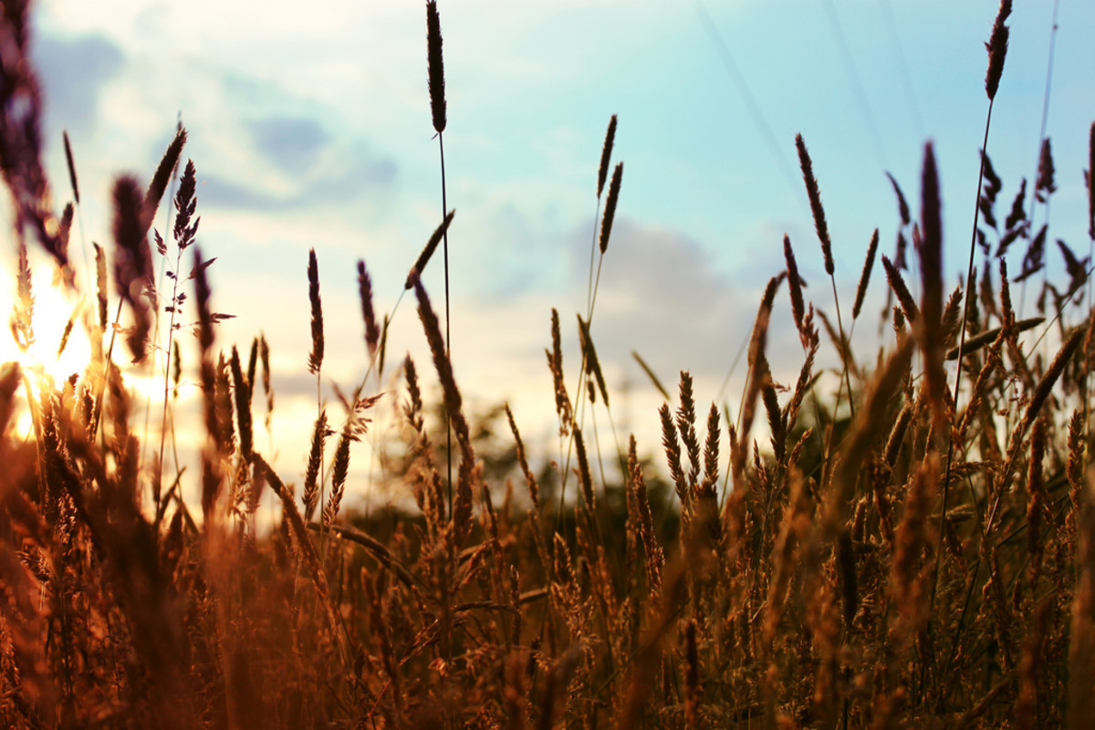 What Is Sustainable Agriculture? What Is Agricultural Sustainability?