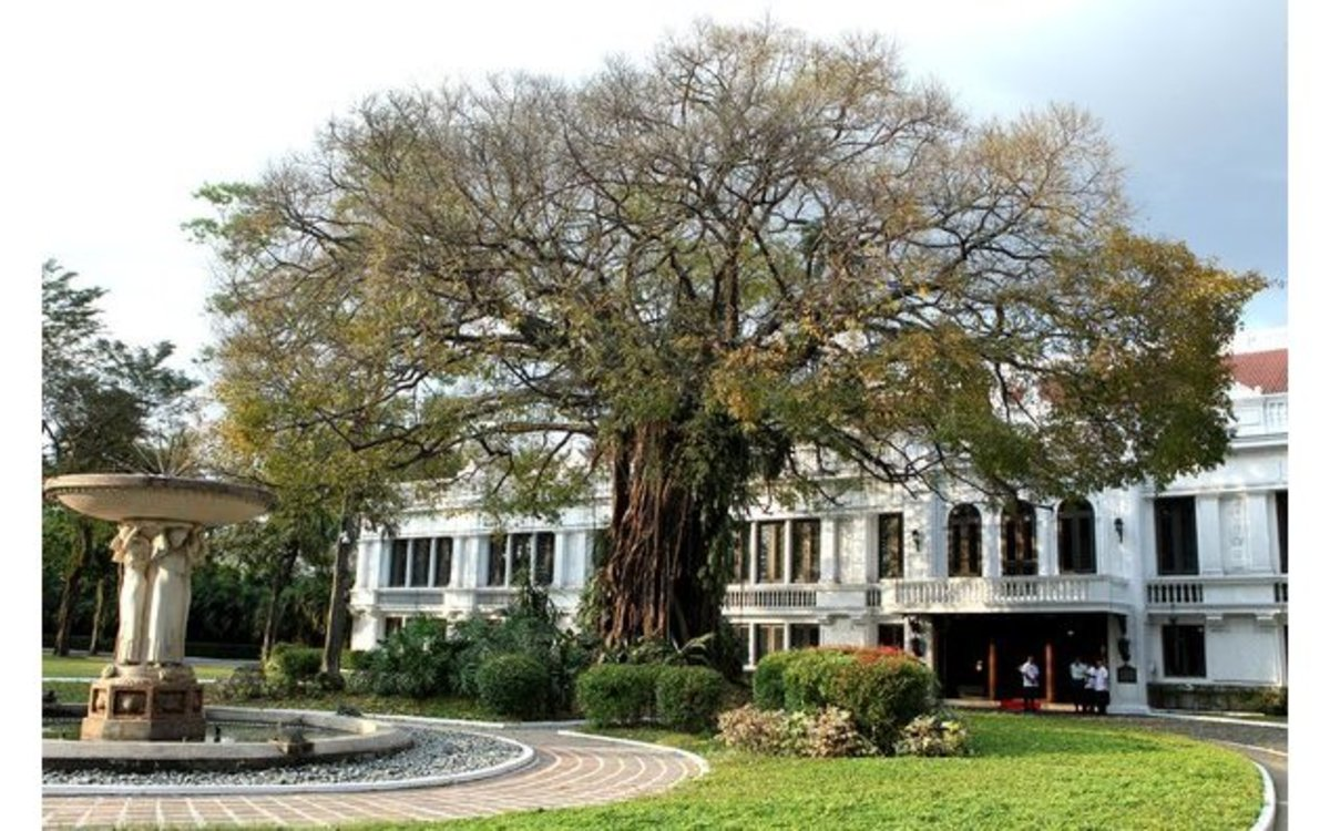 The centennial balete tree in the palace of the president.