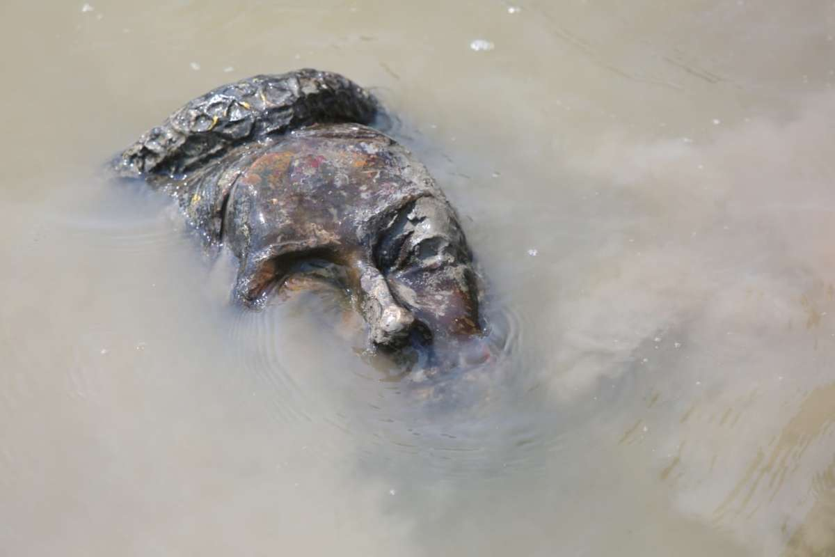 The severed head of the Queen Victoria statue was thrown in the Assiniboine River