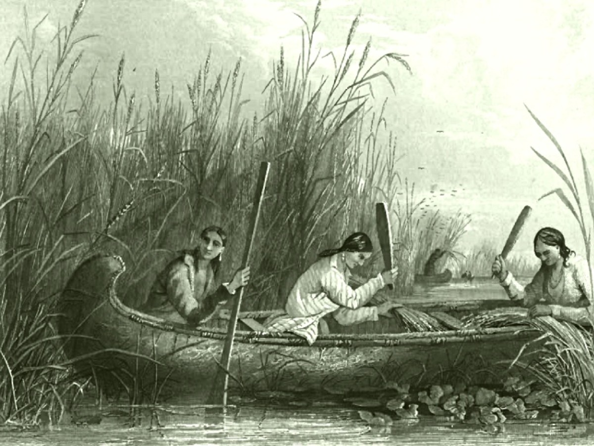 Harvesting wild rice in the eastern United States in the 19th century.