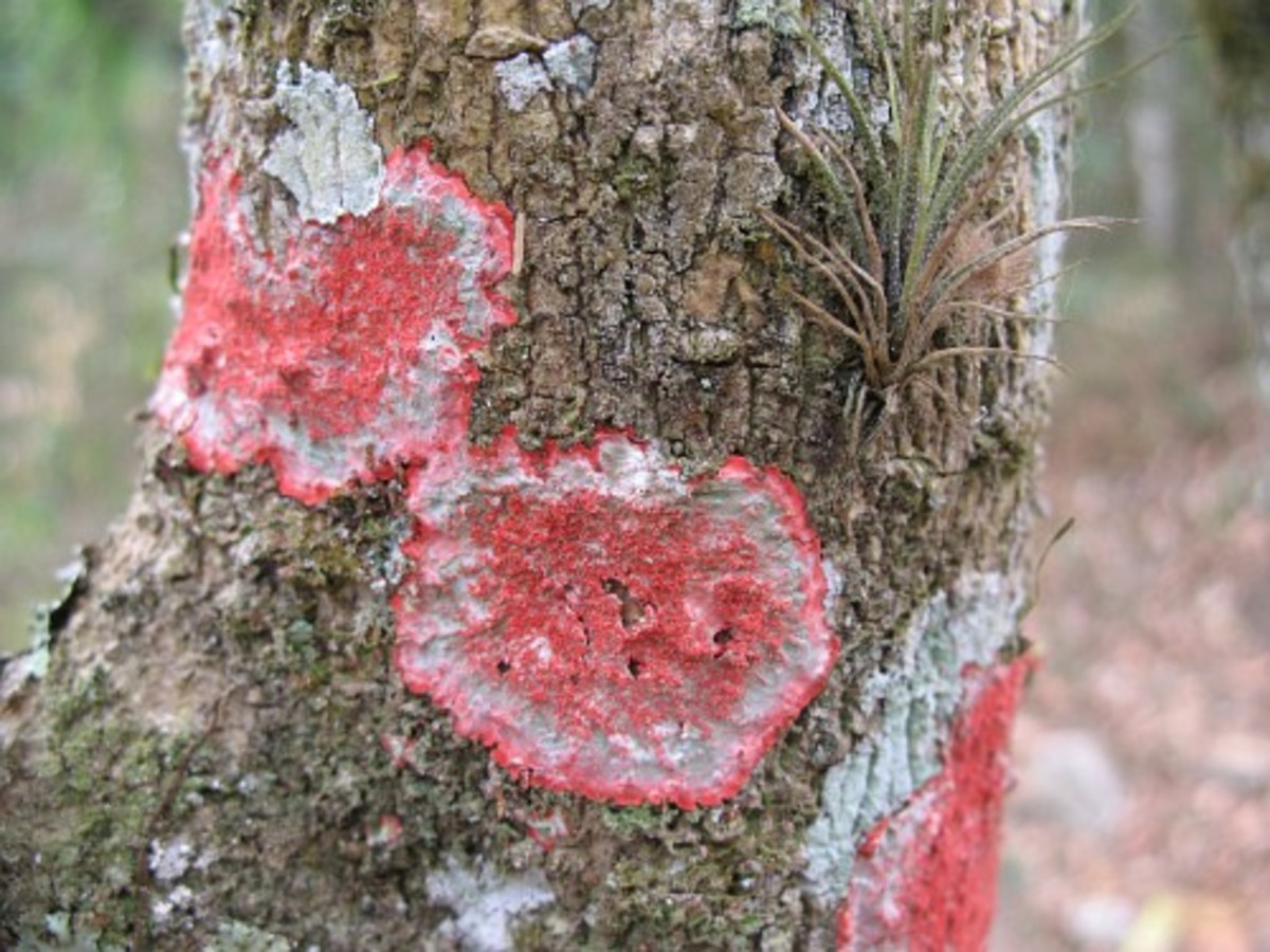 Lichens can have beautiful coloured patterns.