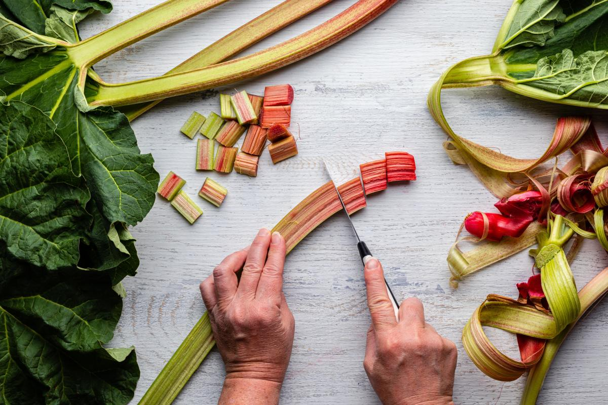 how-to-harvest-rhubarb