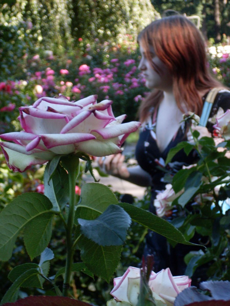 Paula in the Portland Rose Garden. Let us all respect and help one another, whatever age or sex we be, or whatever side of the birth canal we are on.