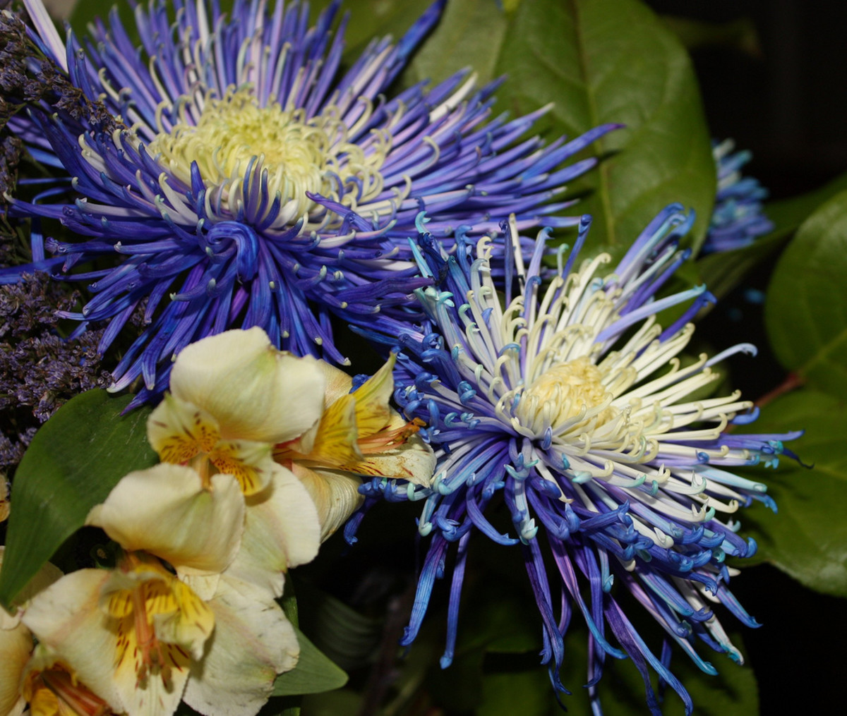 How the Spider Mum flower thrives:a sonnet on overcoming obstacles