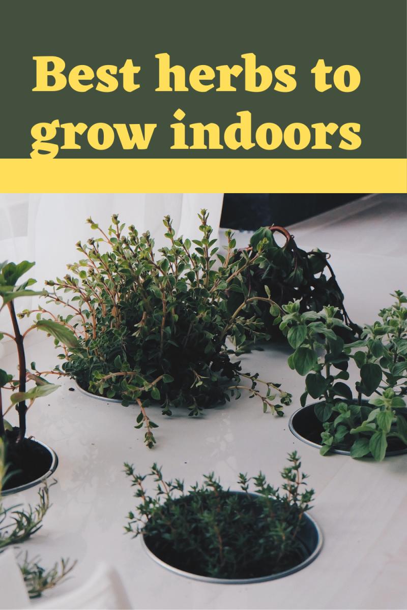best-herbs-to-grow-indoor