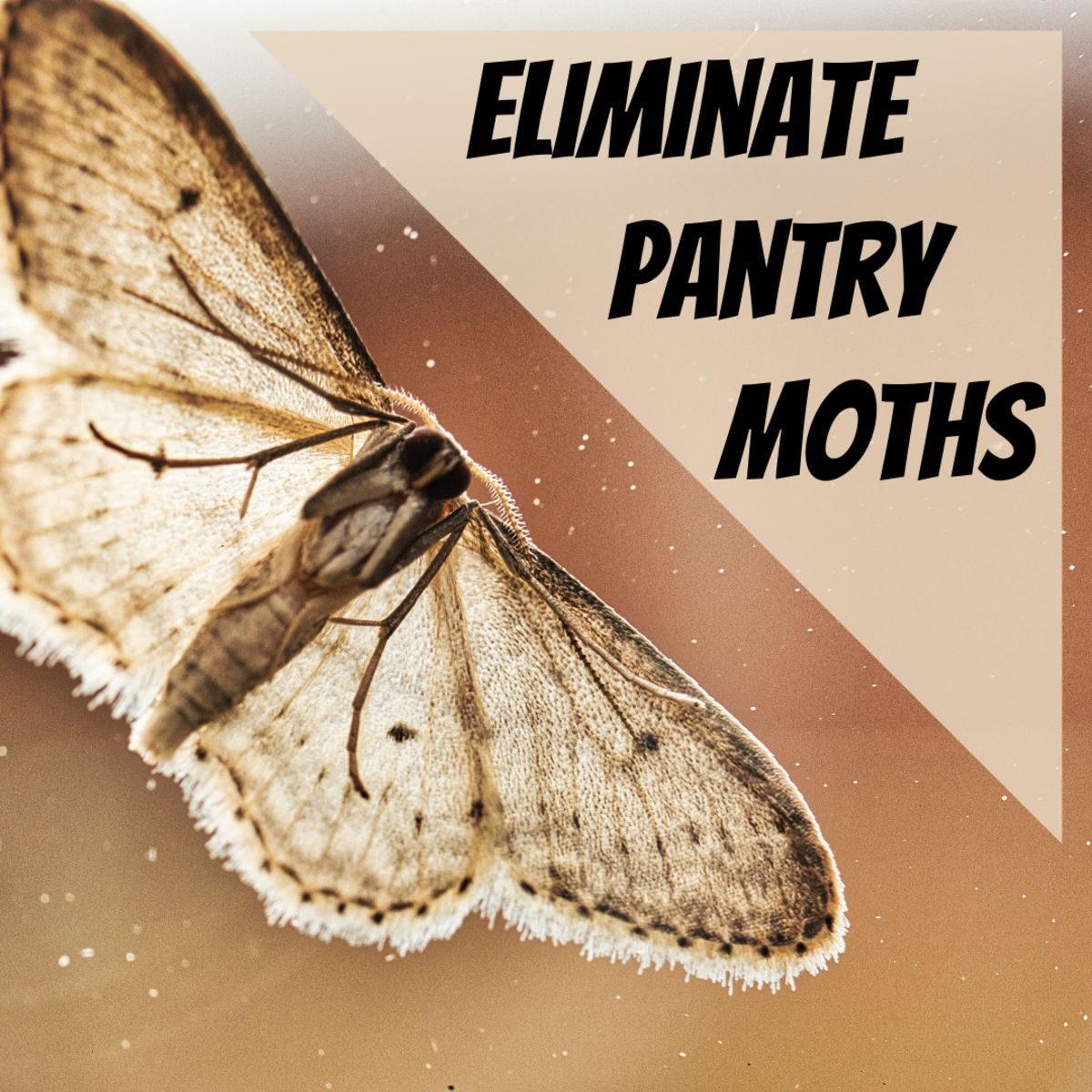 This article provides step-by-step instructions to help you eliminate pantry moths from your house and prevent a re-infestation
