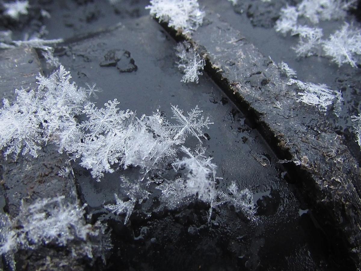 Each lace-like snowflake is unique.
