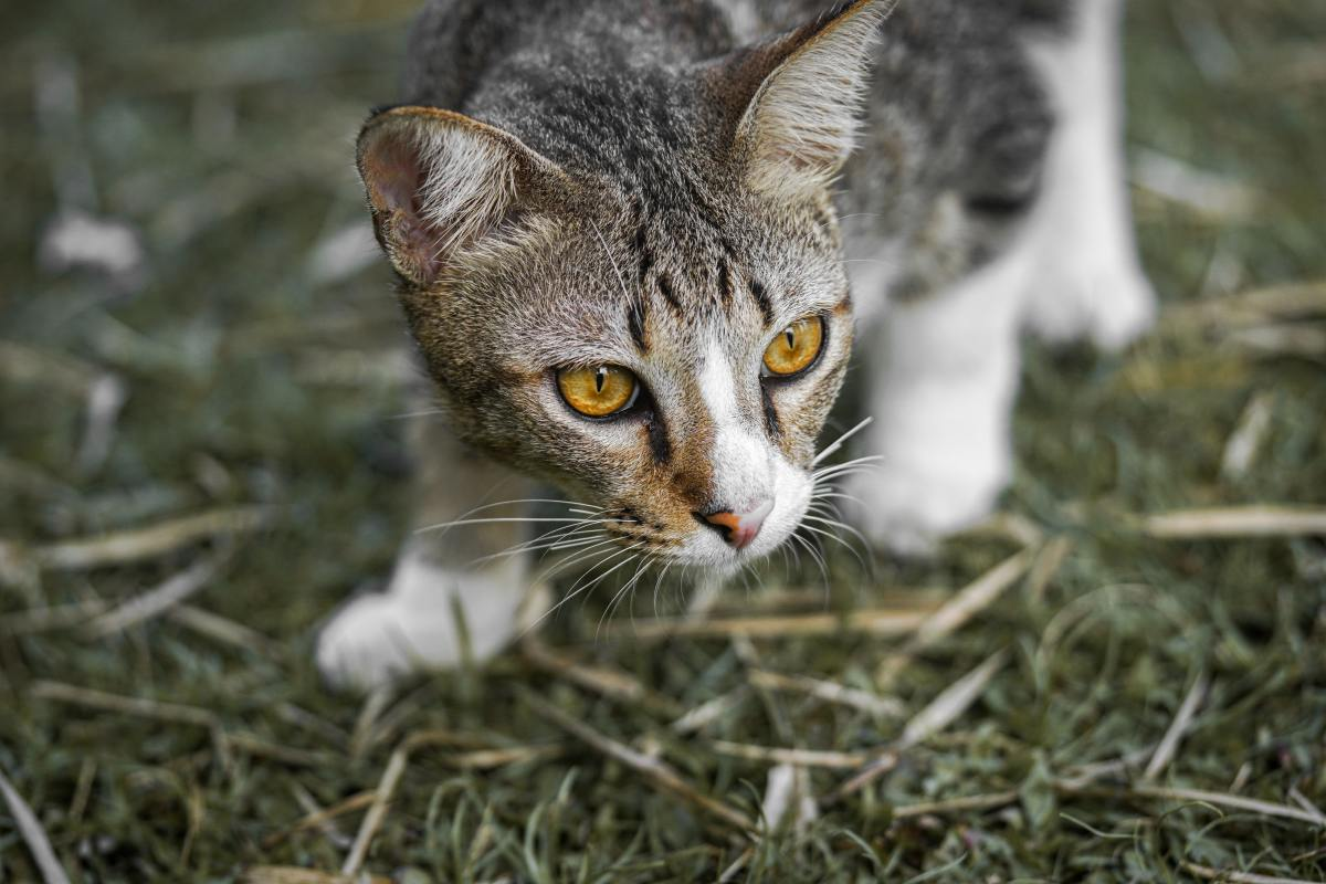 the-truth-behind-cat-hunting-and-hiding-behaviors