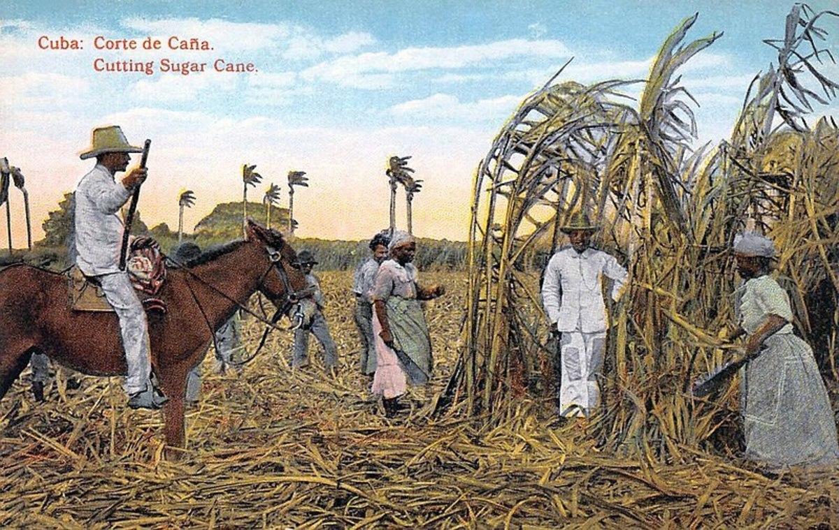 Edicion Jordi post card of cane cutting in Cuba, circa 1914 - Public Domain