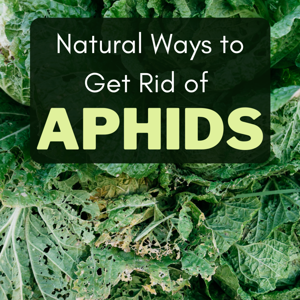 If your garden is being plagued by pests, these natural solutions will help.