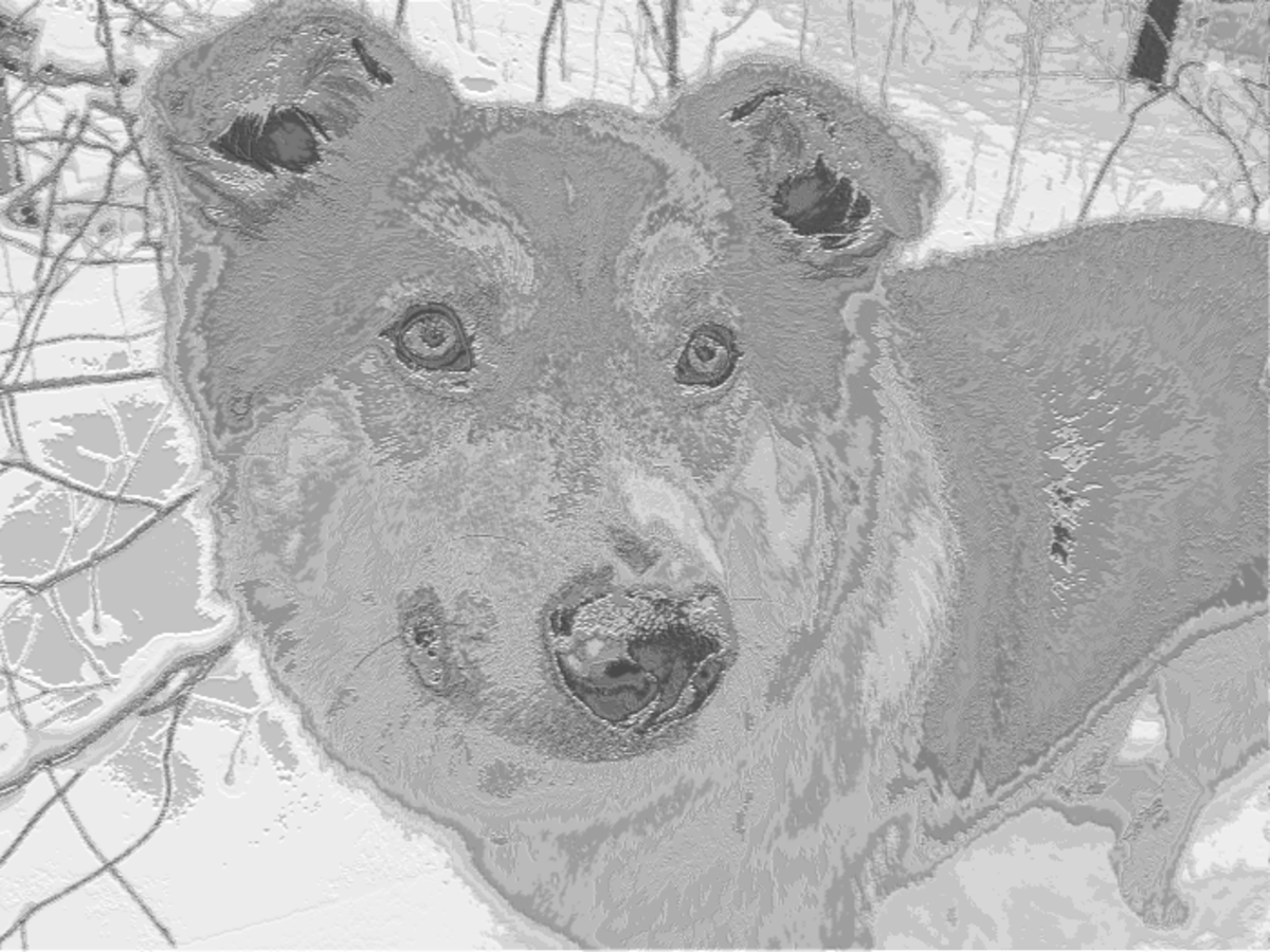 Photo of my dog to ASCII text image using a small font.