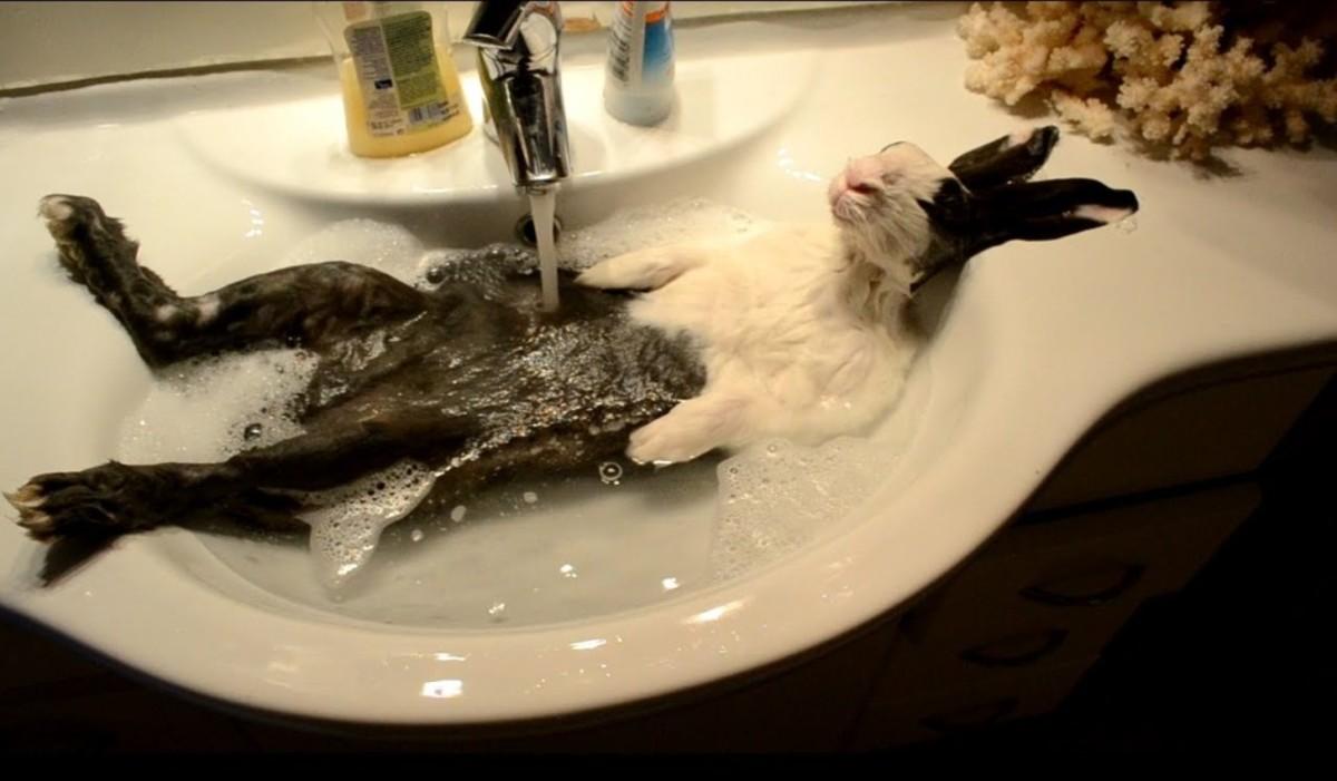 No Baths For Bunnies!