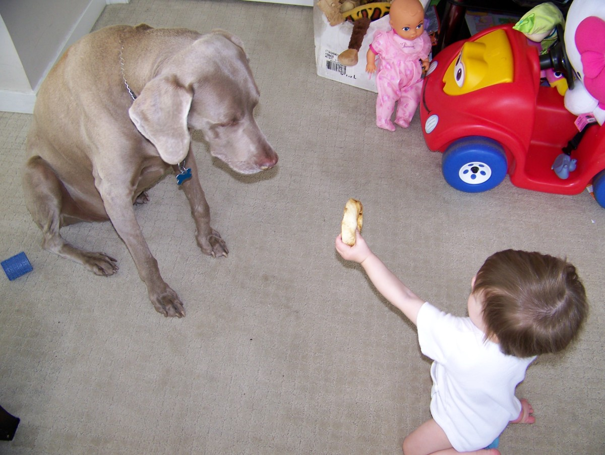 My daughter at one years old, offering the dog his toy.