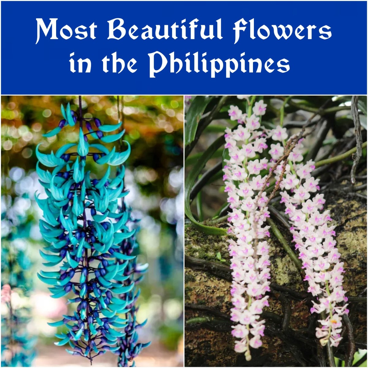 Here are 10 of the most beautiful flowers in the world!