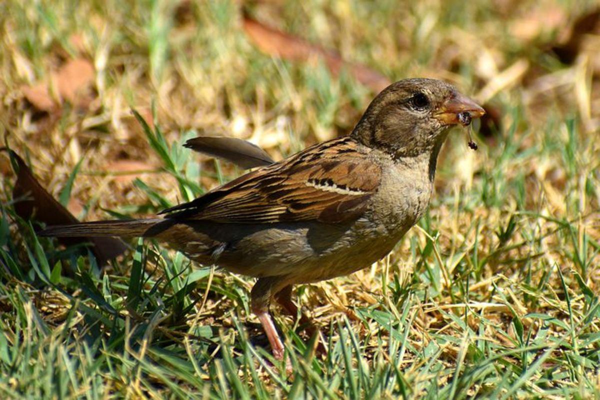 baffled-sparrow