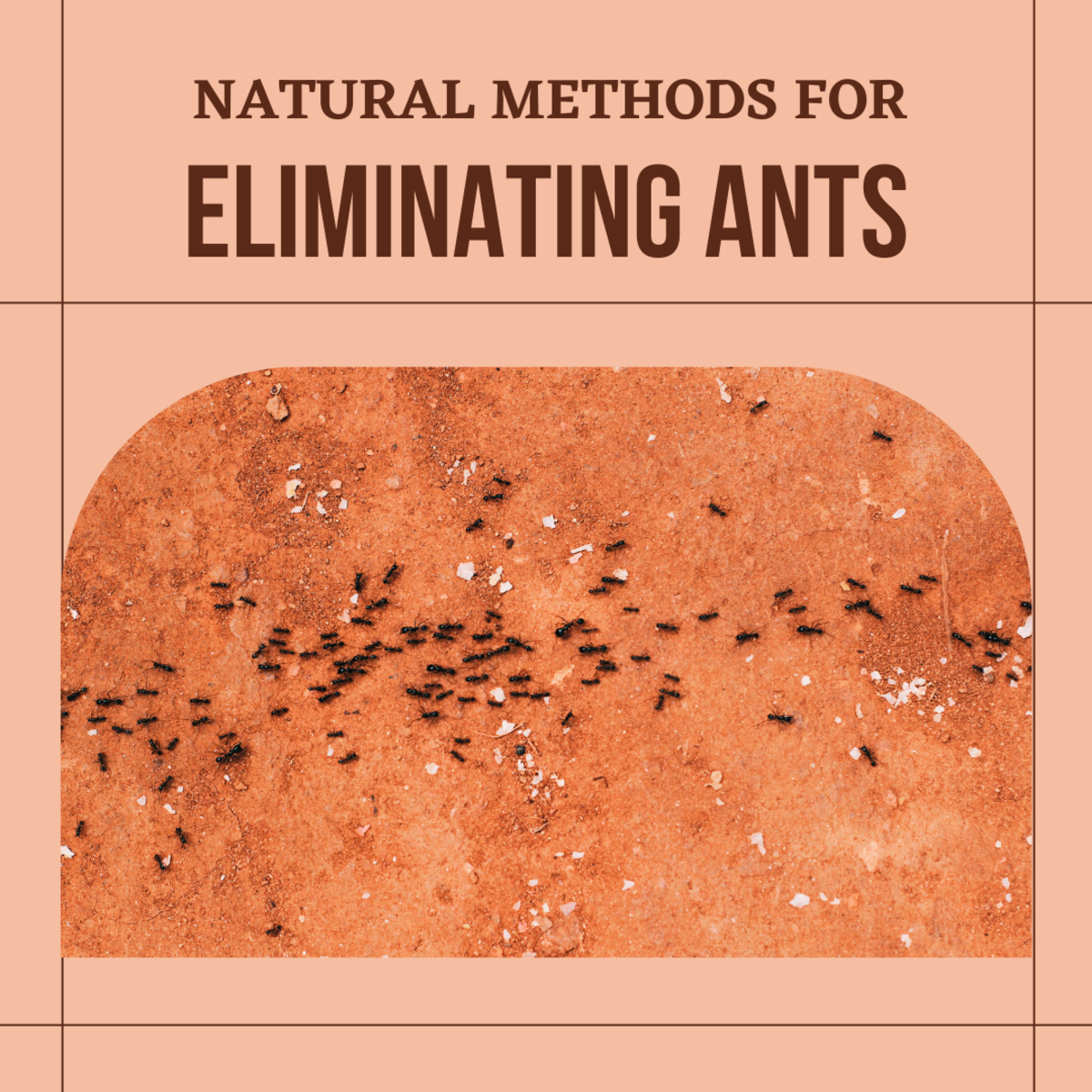 Are you dealing with an ant infestation? Learn what ants are attracted to, how they get in your home, and natural ways to get rid of them!