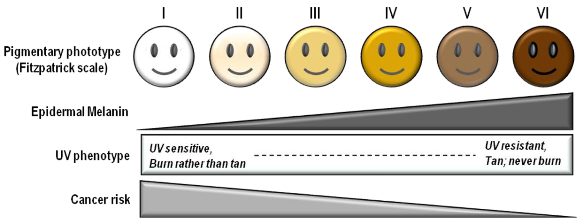 The Fitzpatrick skin type scale