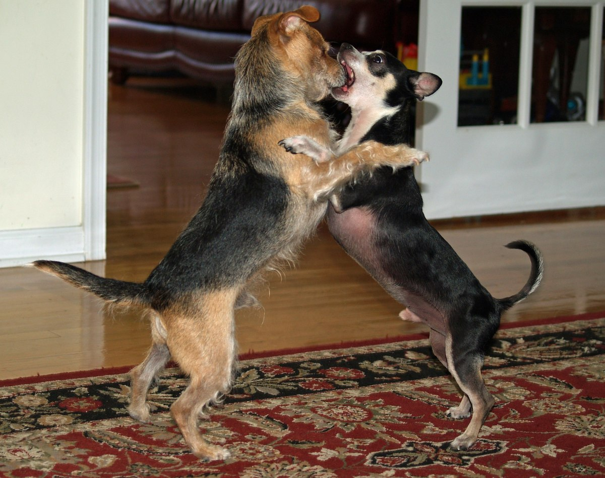weird-dog-behaviors-and-what-they-mean-in-reality