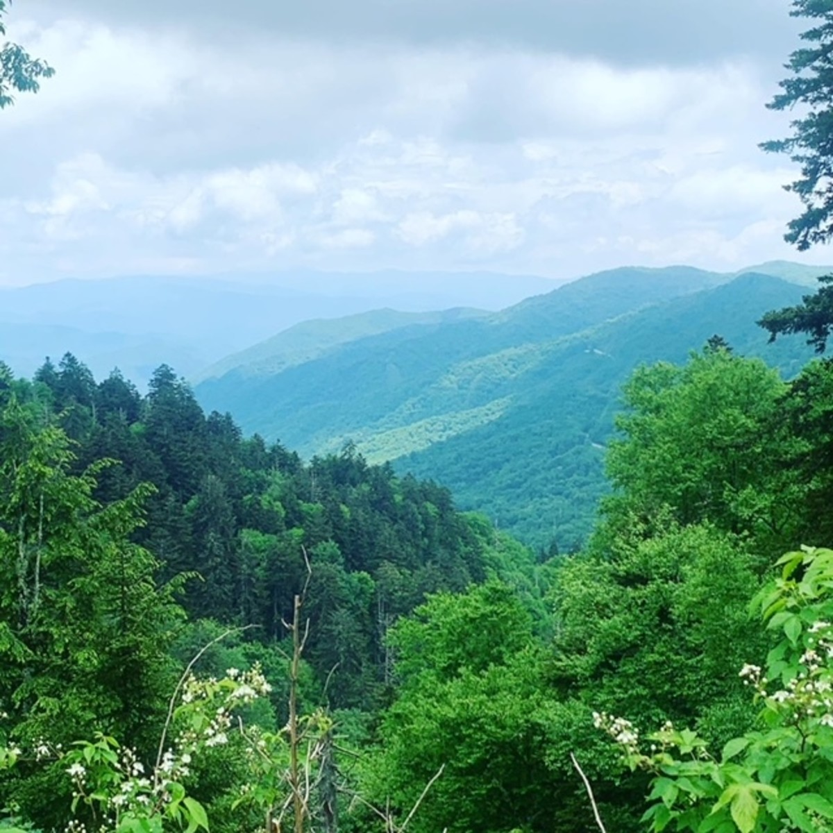 A view from the first overlook going to Clingman's Dome