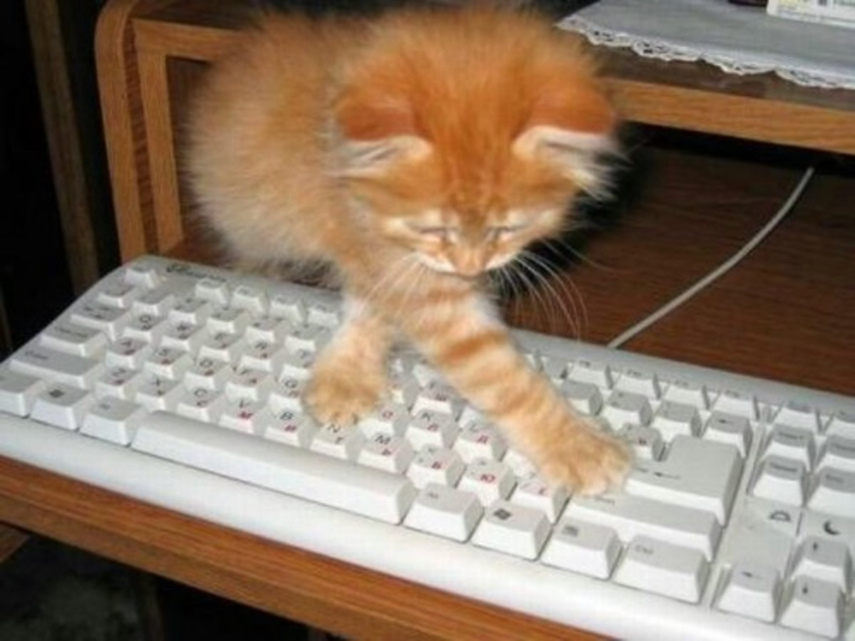 One note worthy thing to mention about cats is that they are very computer literate. I bet you didn't know that.