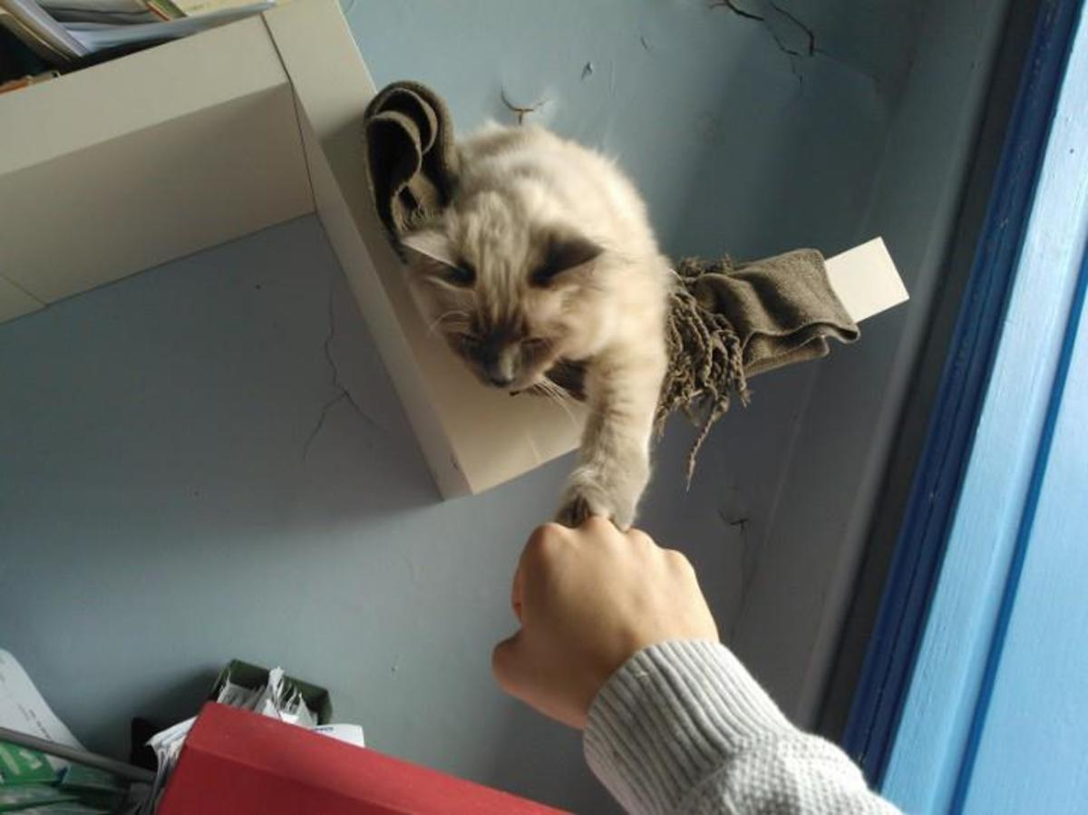 Even cats have joined the current wave of fist bumping these days.