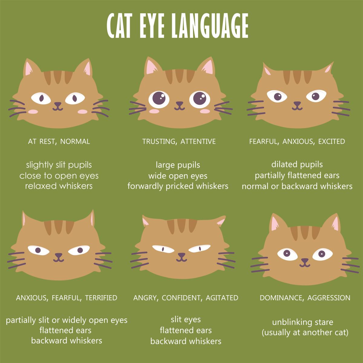 Cat Eye Language