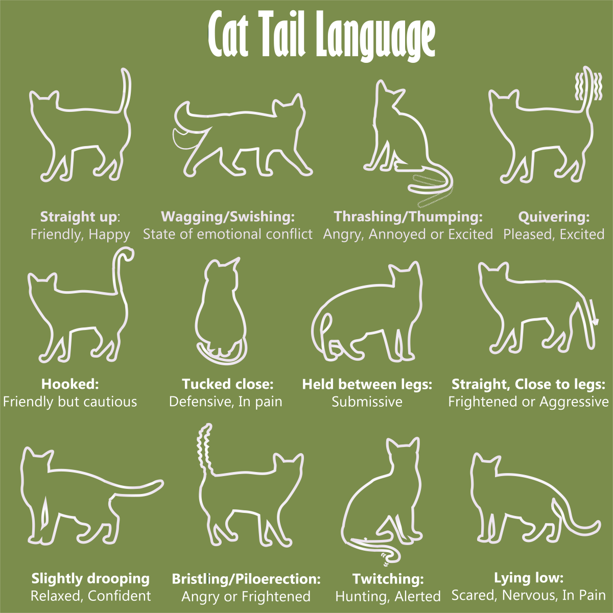 Tail Language of Cats