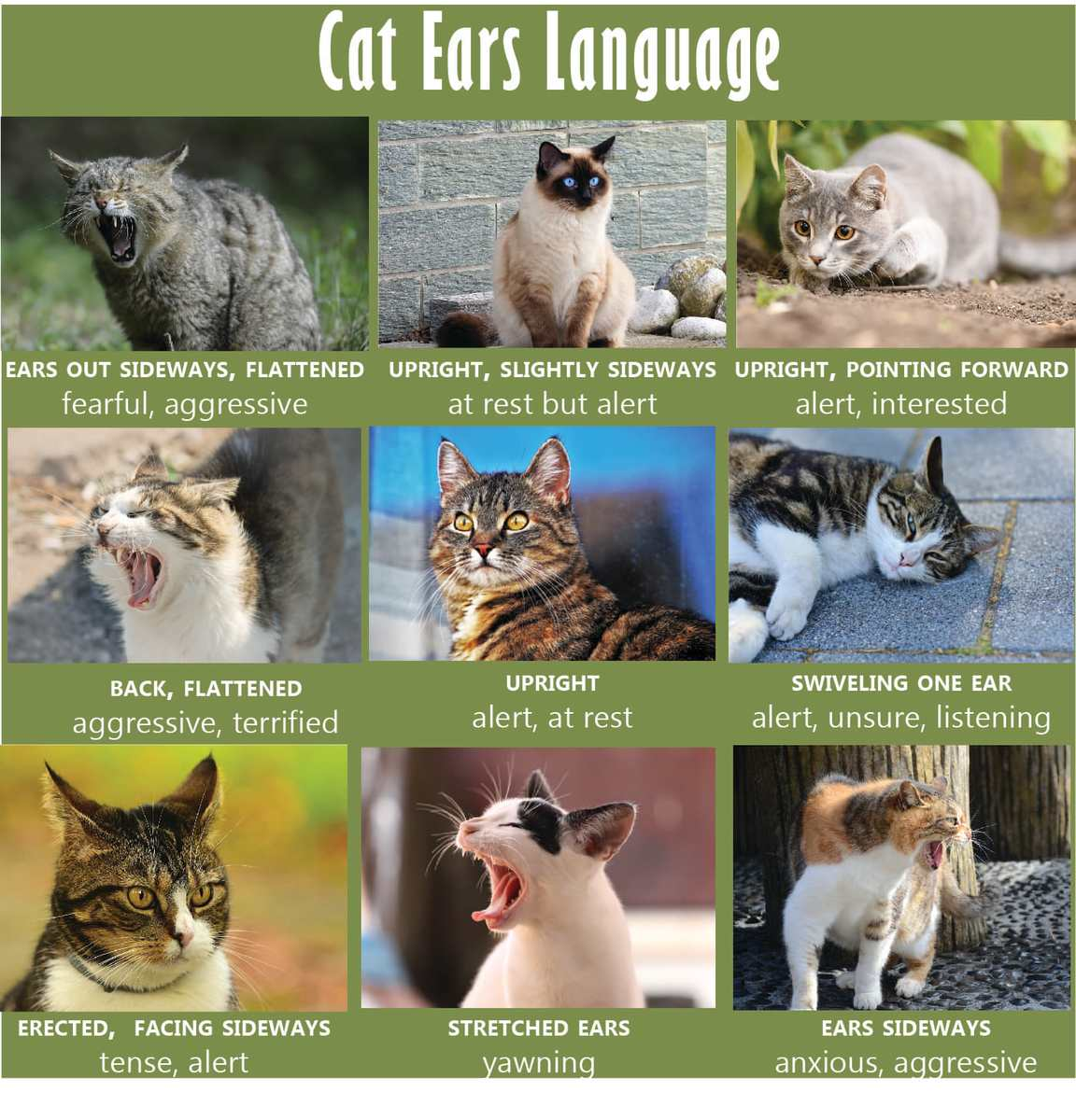 Cat Body Language Chart and Pictures