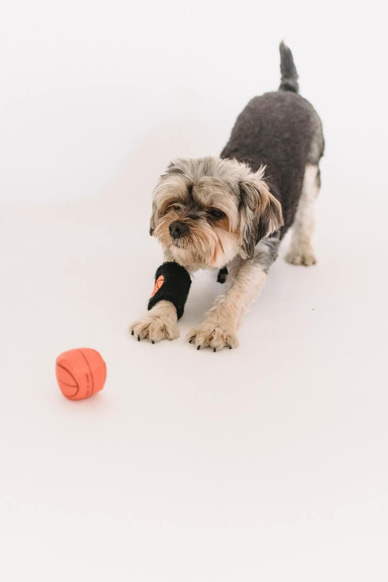 my-review-of-several-hide-squeek-toys-that-you-can-find-on-chewycom