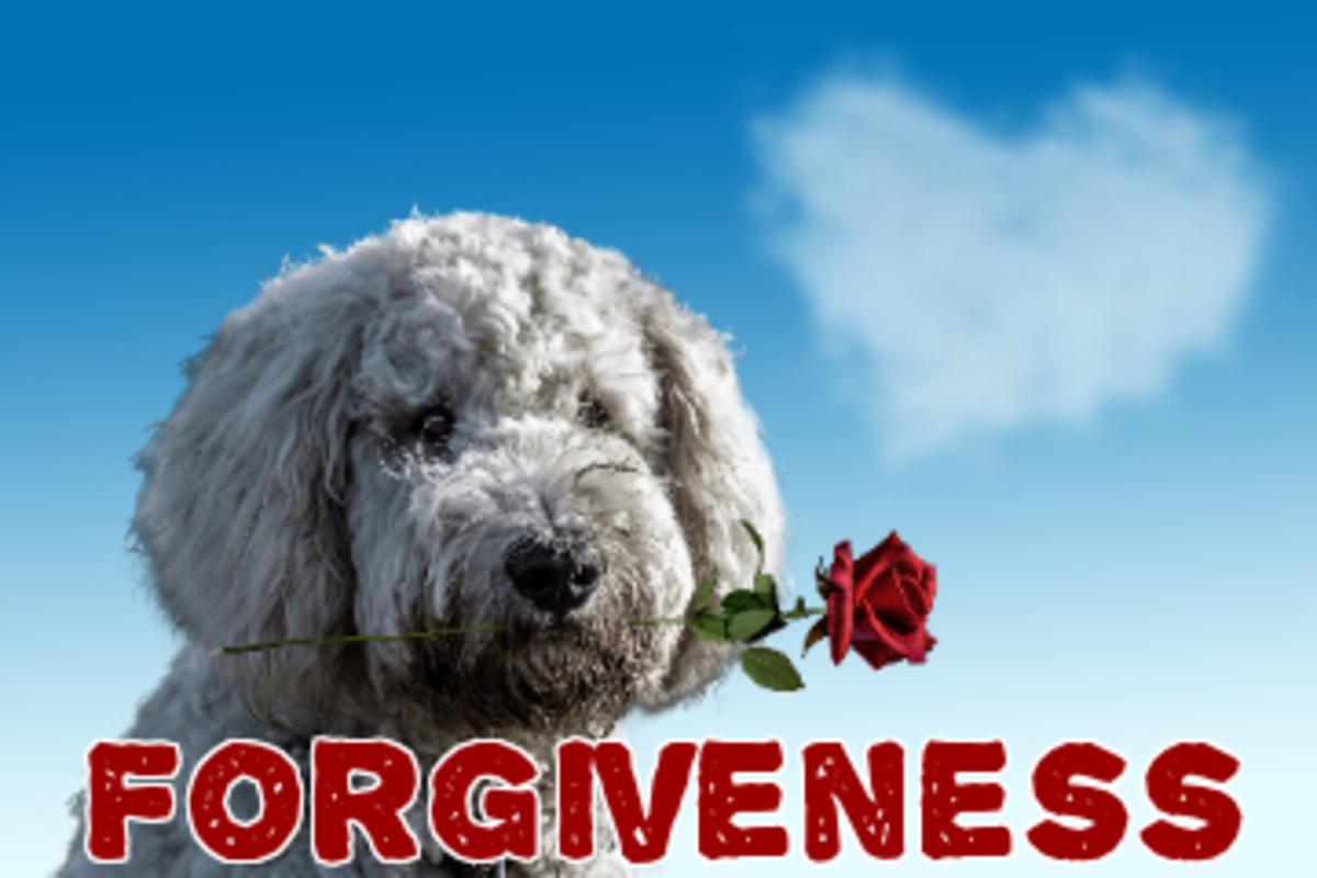poem-forgiveness-brings-hope