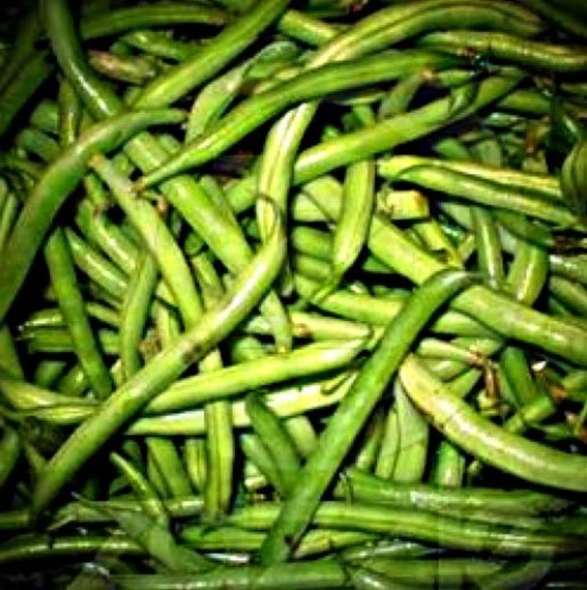 Garden Fresh Green Bean Salad Recipes