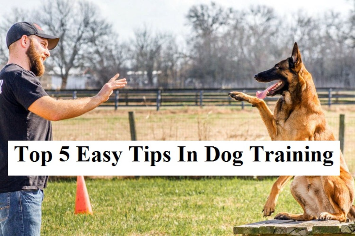 top-5-dog-training-tips