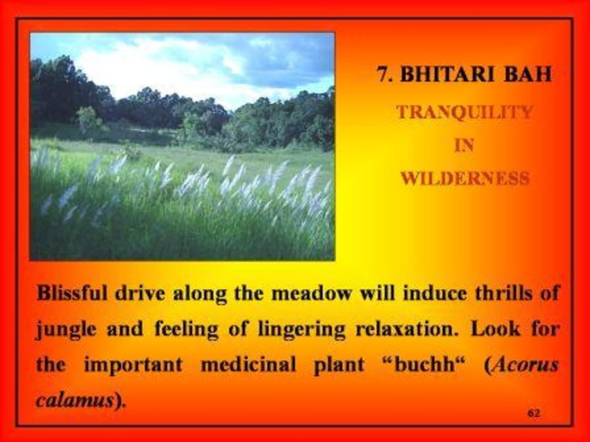 Bhitari Meadow at Bandhavgarh