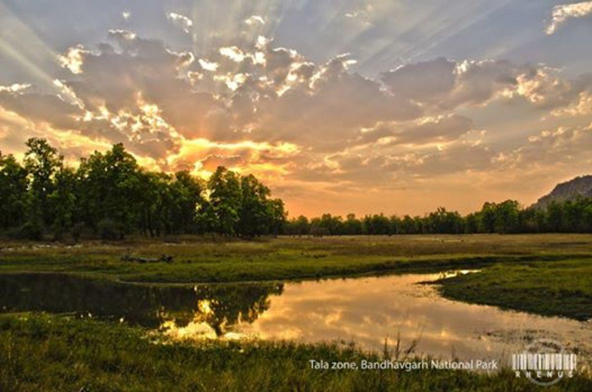 Bandhavgarh Forest Photo