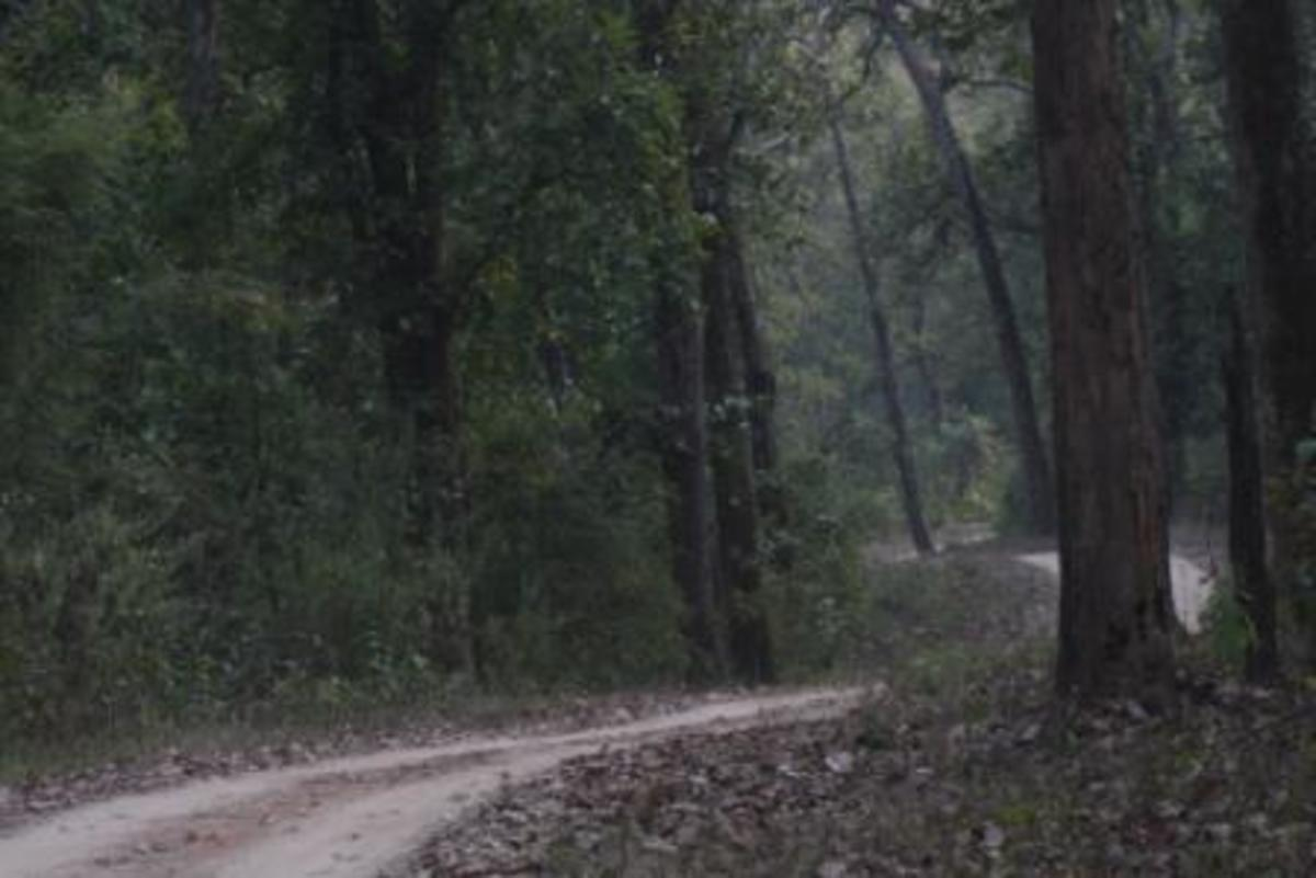 Jungle Road in Bandhavgarh National Park