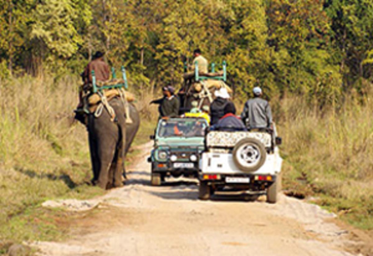 Tiger Safari on Jeep