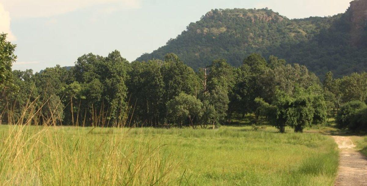 Dense Forest Photo
