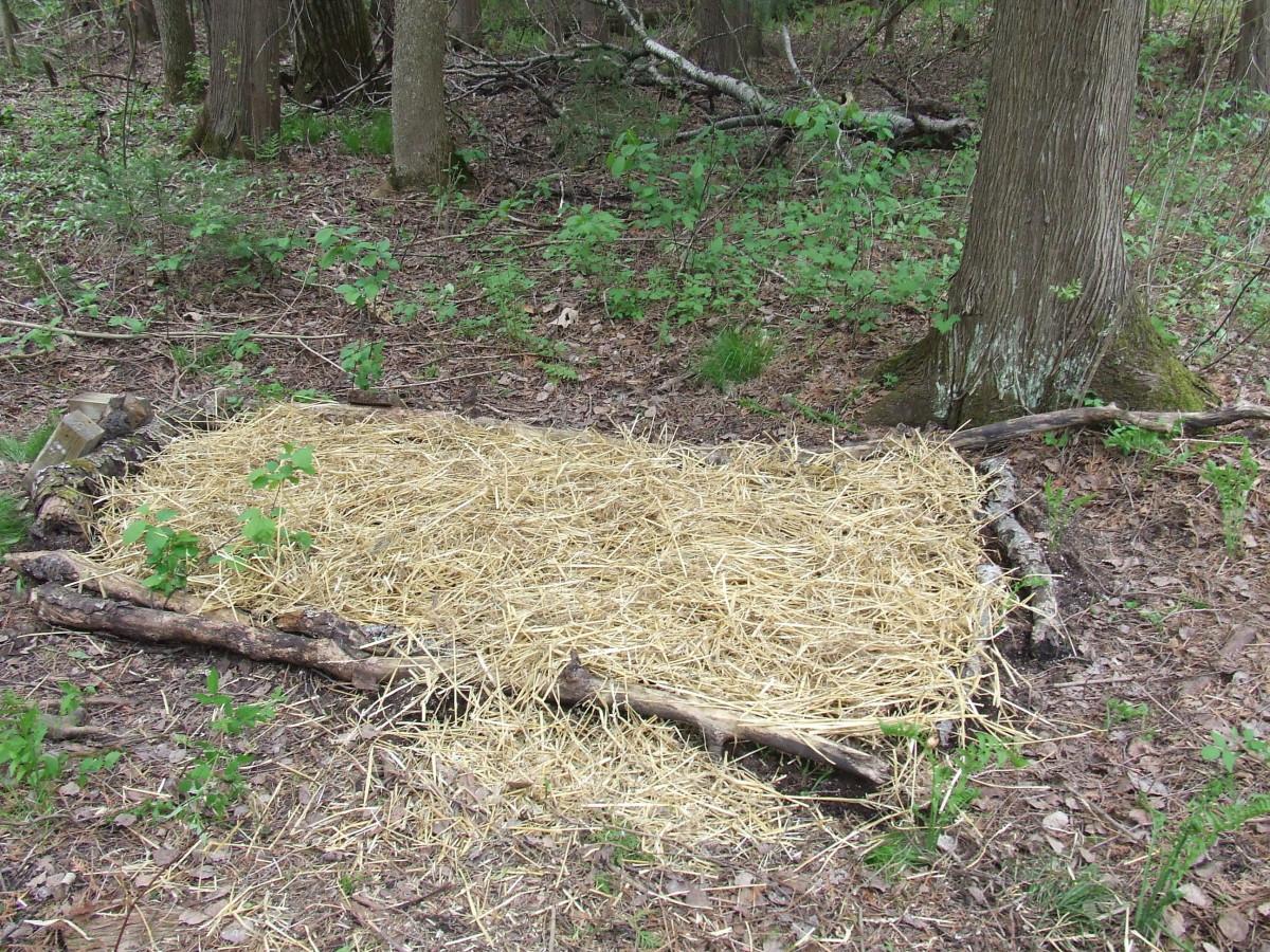 One of my Nameko mushroom beds.