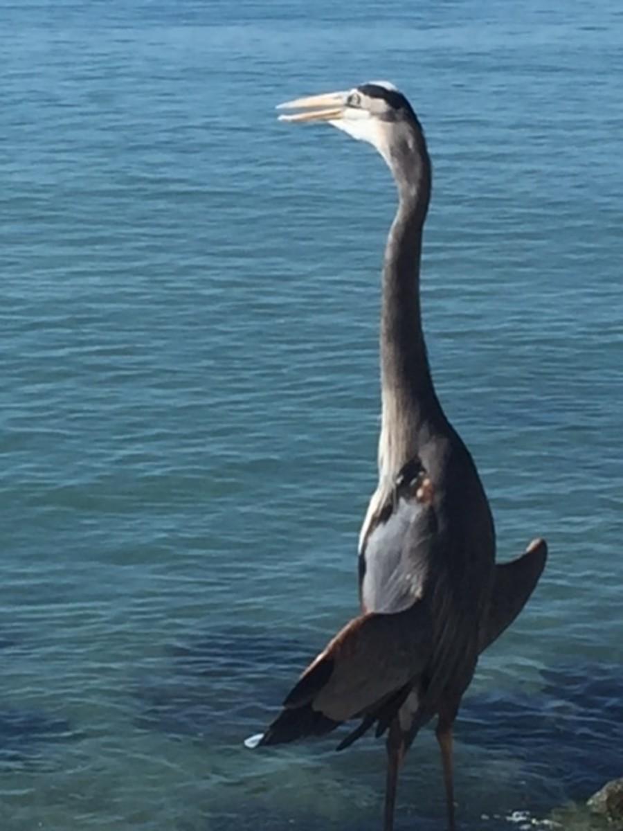 A bird encounter