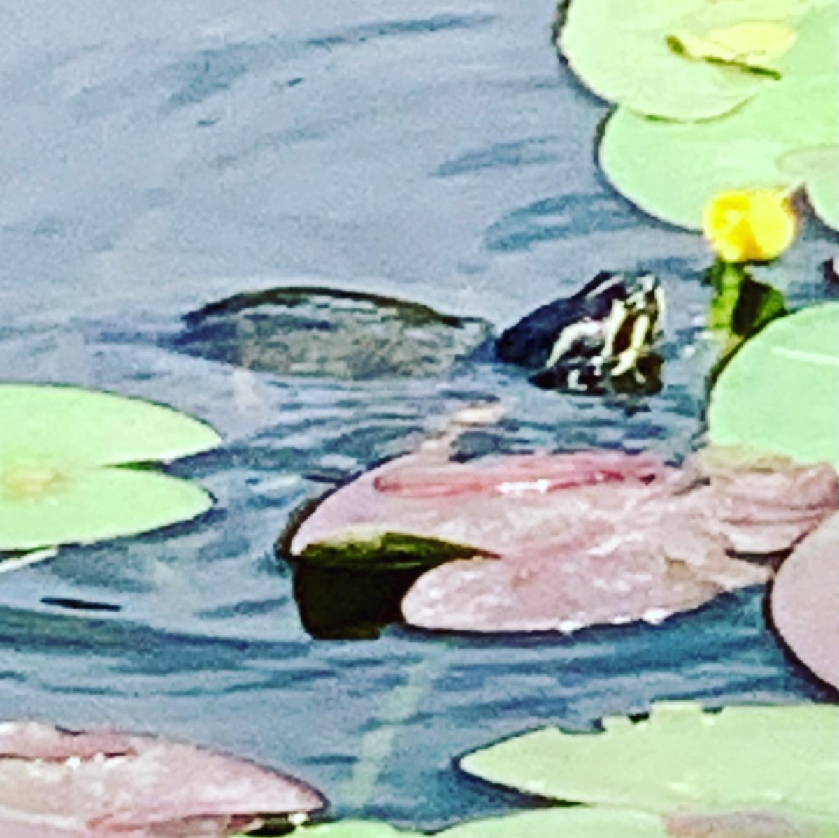 A turtle encounter