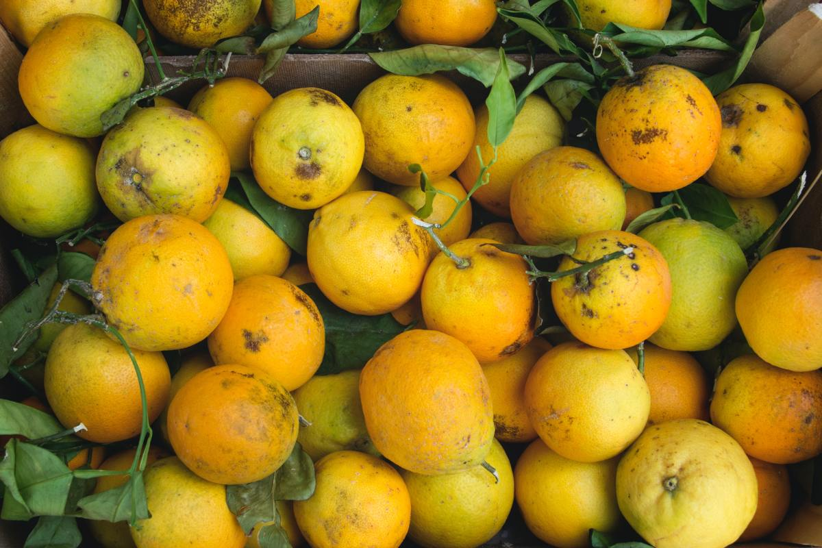 Caterpillars hate citrus, so an easy spray made with lemons, oranges, etc., can help repel cabbage worms.