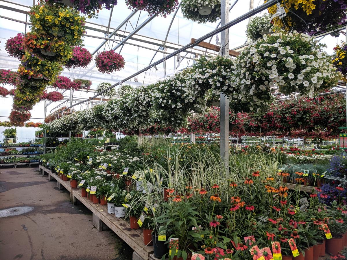 mesophytes-our-everyday-garden-plants