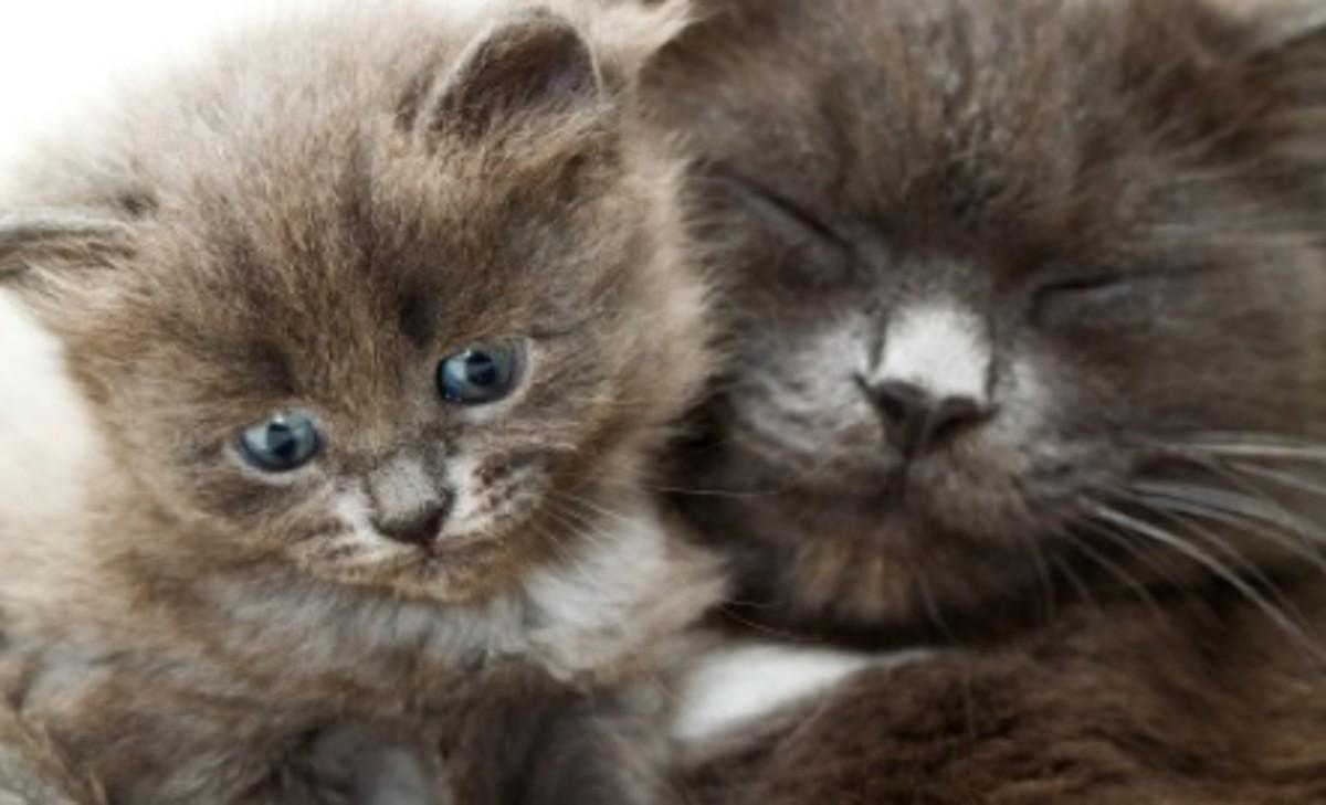 Mama Cats