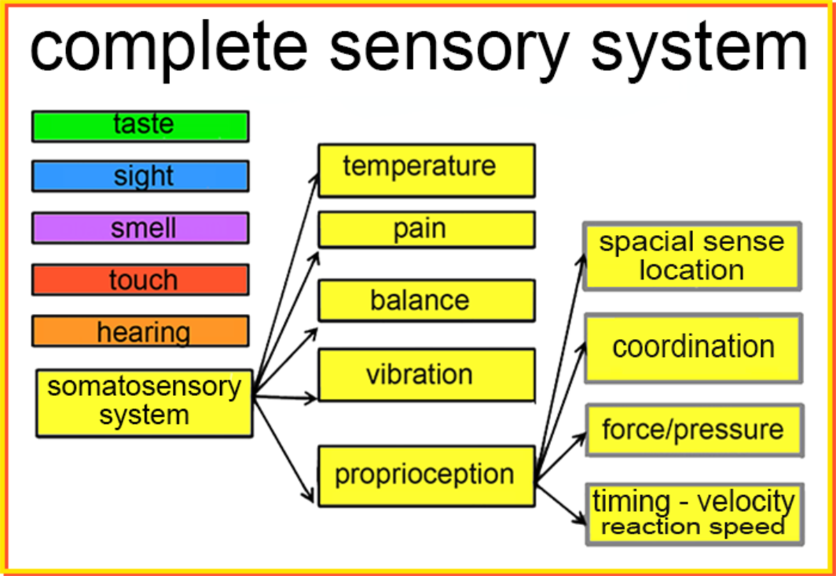 add-to-your-senses-with-the-somatosensory-and-proprioception-systems