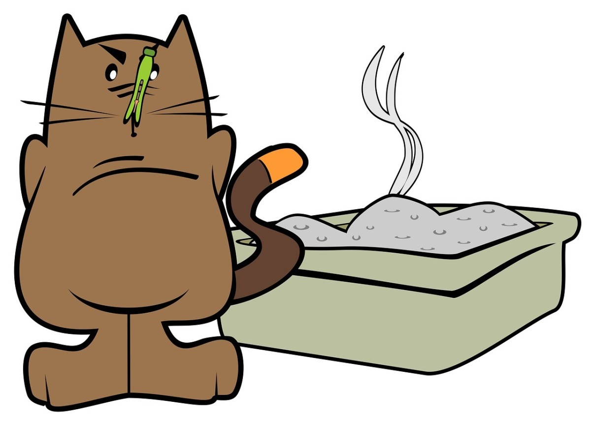 feeding-your-cats-meow-healthy-alternatives-for-indoor-cats