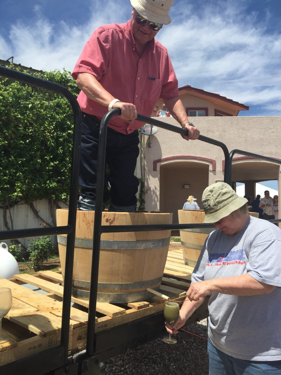 Here I am stomping grapes while keeping an eye on the bottom of the barrel to make sure drainage hole is clear of grape skins so the juice glass will fill quicker