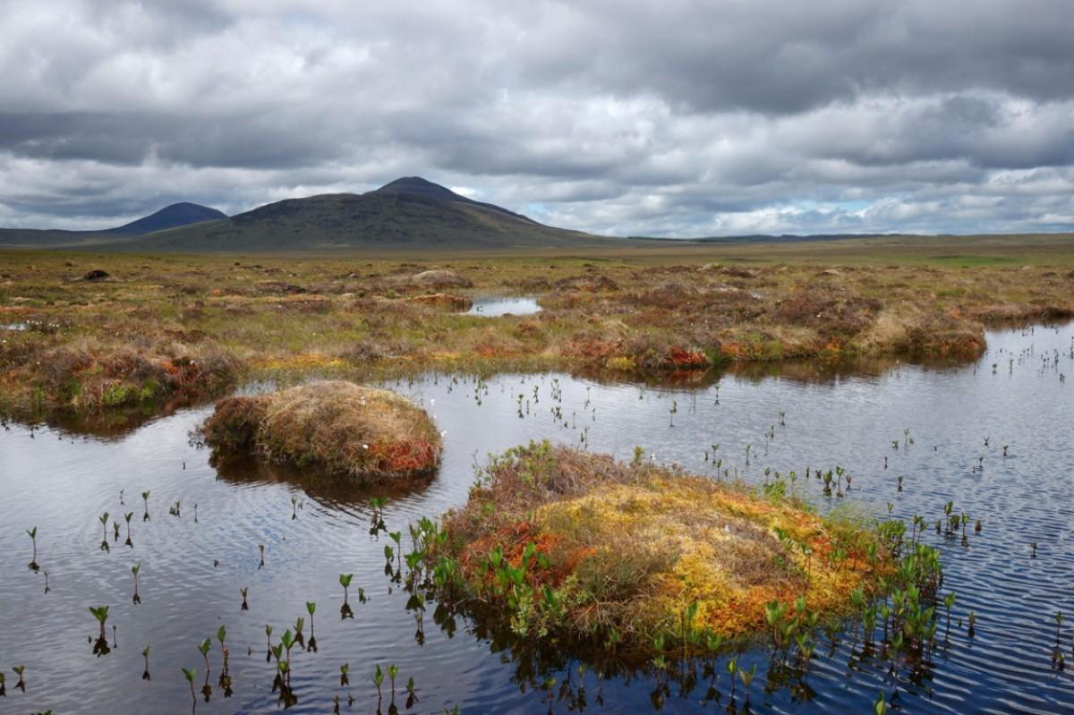 Bog Scotland