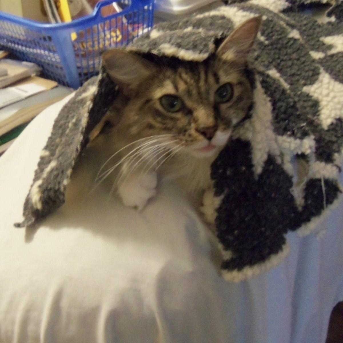 Lady Featherstone - Pet Adoption Story